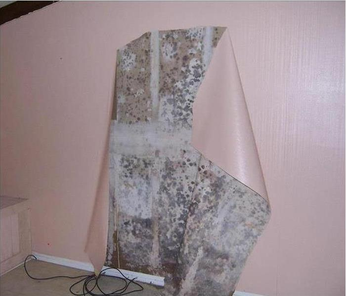 Mold Remediation Mold Behind Wallpaper