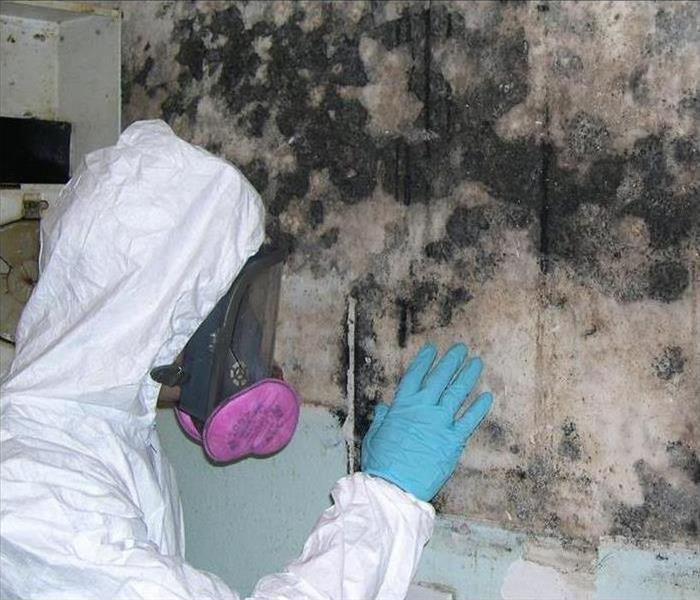 Mold Remediation Mold Removal & Remediation