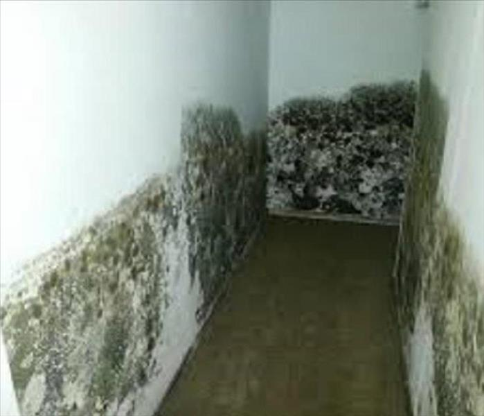 Mold Remediation 10 Facts About Black Mold